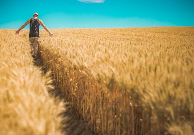 Man walking through field of grain
