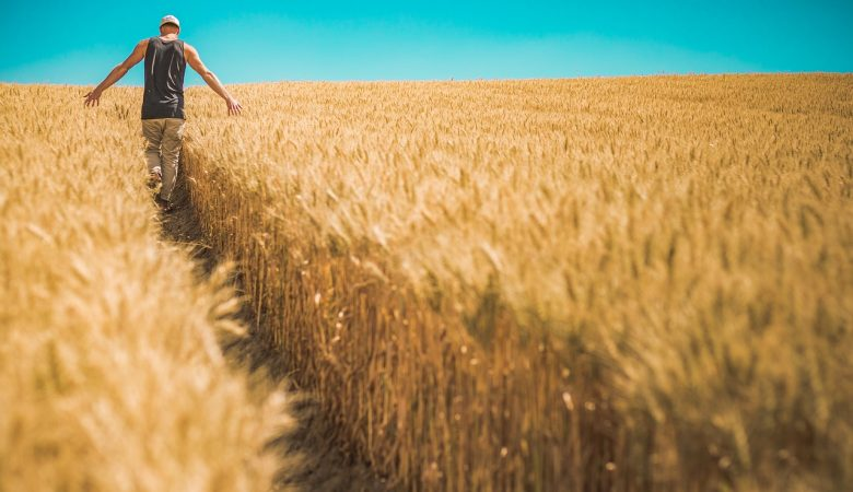 Man walking through field of grain